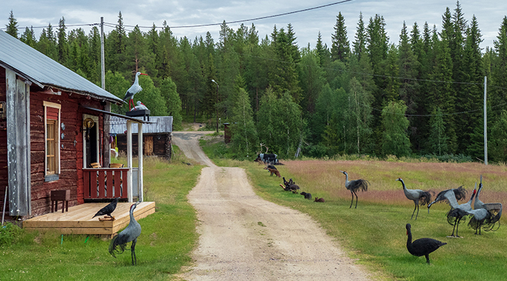 Nätkonst i Marielund