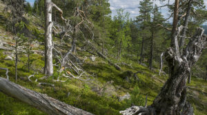 Våra naturreservat & nationalparker