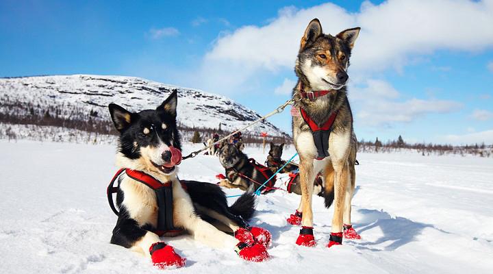 Cold Nose Huskies