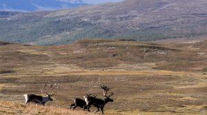 Peijlekaise National Park